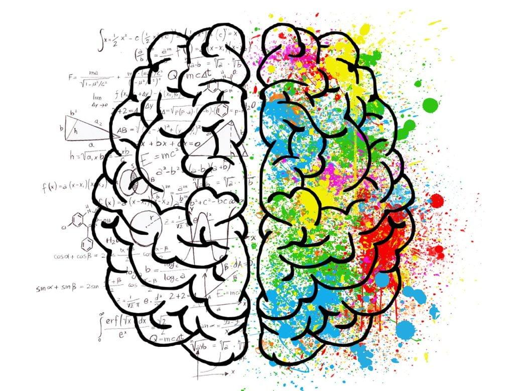 mózg - prawa i lewa półkula